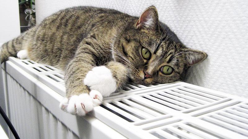 C mo poner a punto los radiadores para el fr o for Como purgar radiadores de calefaccion